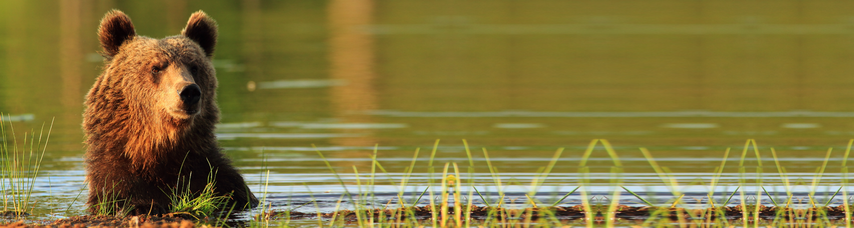 Header Bär Wasser Bundesverfassung
