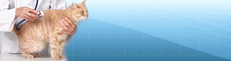 Header Katze Vet Tierarzt