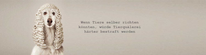 Header_Tierische-Richter-Hund.png