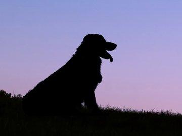 Hund Gedenkfonds Platzhalter