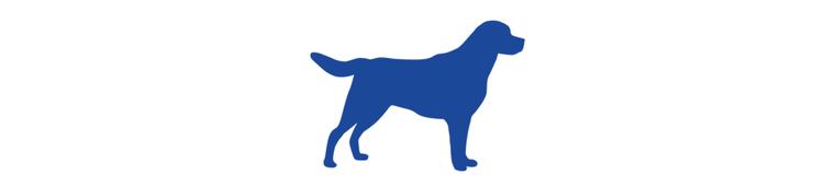 Icon Hund Goldie Hunderecht