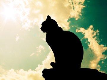 Katze Gedenkfonds Platzhalter