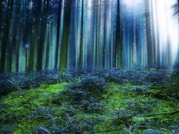 Wald Gedenkfonds Platzhalter